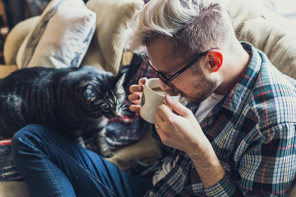 Malzpaste für Katzen