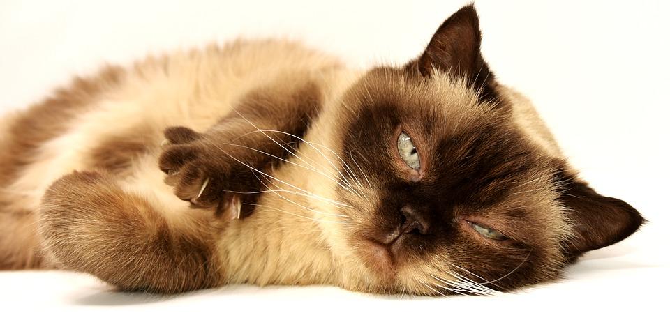 Welches Bio Katzenstreu kaufen?