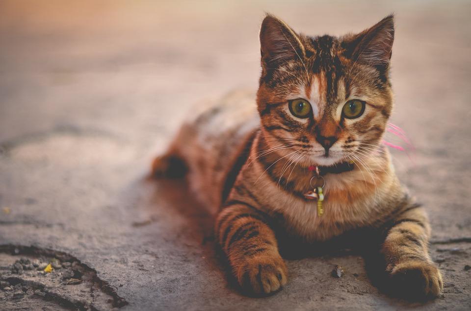 Katzenwendeltreppe. Spaß und Bewegung für die Katze!