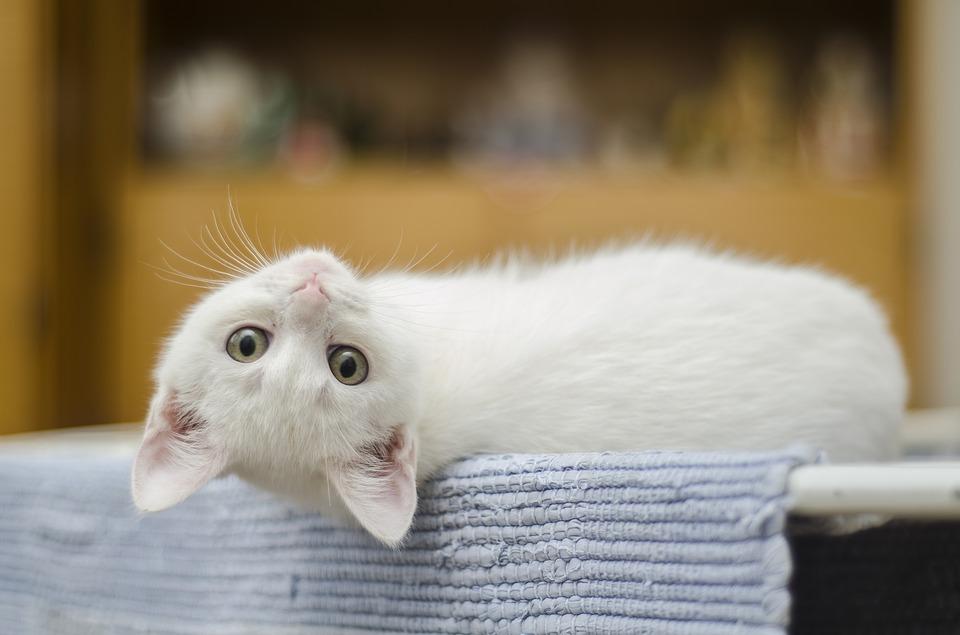 Katzentreppe für Innen – Alle Infos!