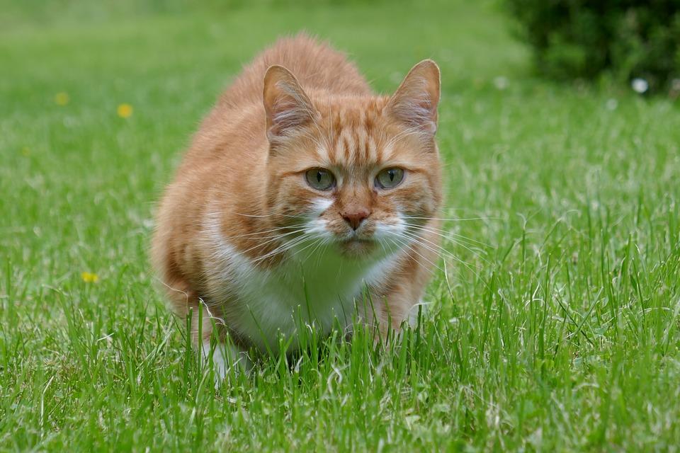laserpointer für katze