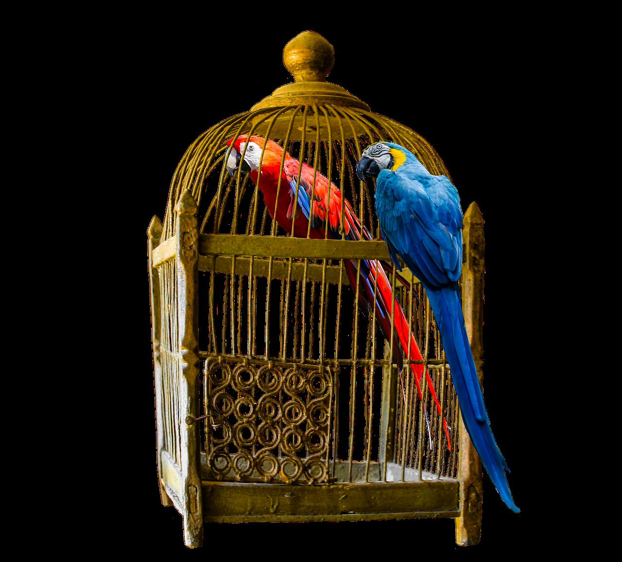 Vogelkäfig finden – Das perfekte Zuhause für deinen Vogel