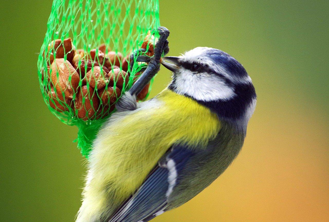 Vogelfutterspender – Damit dein Vogel sich wohl fühlt