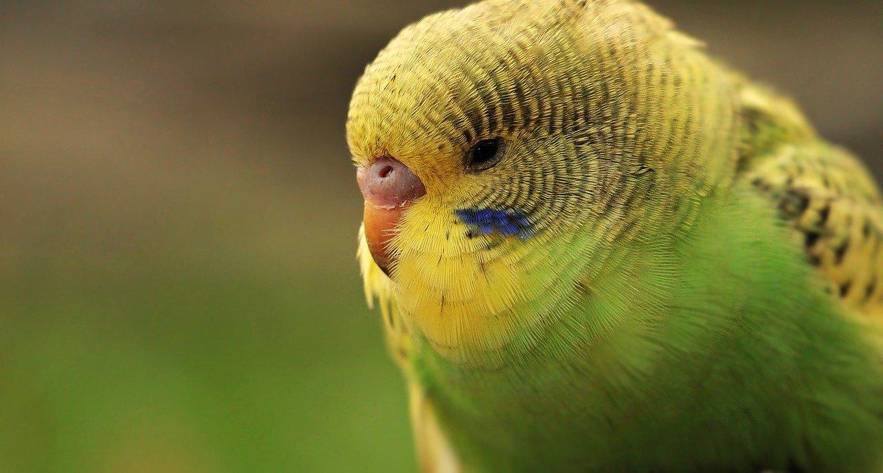 Der richtige Vogelsand – leicht gekauft