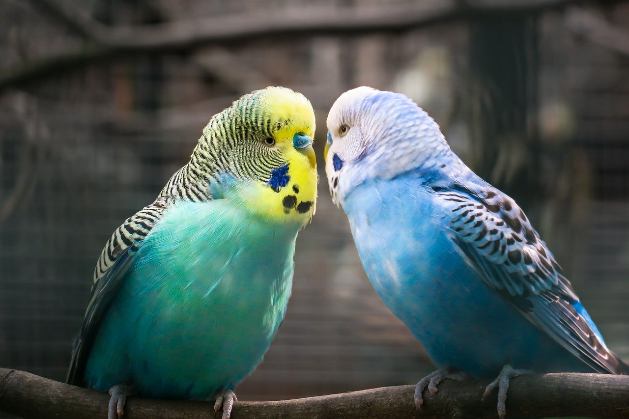 Vogelsitzstange – ganz leicht gefunden
