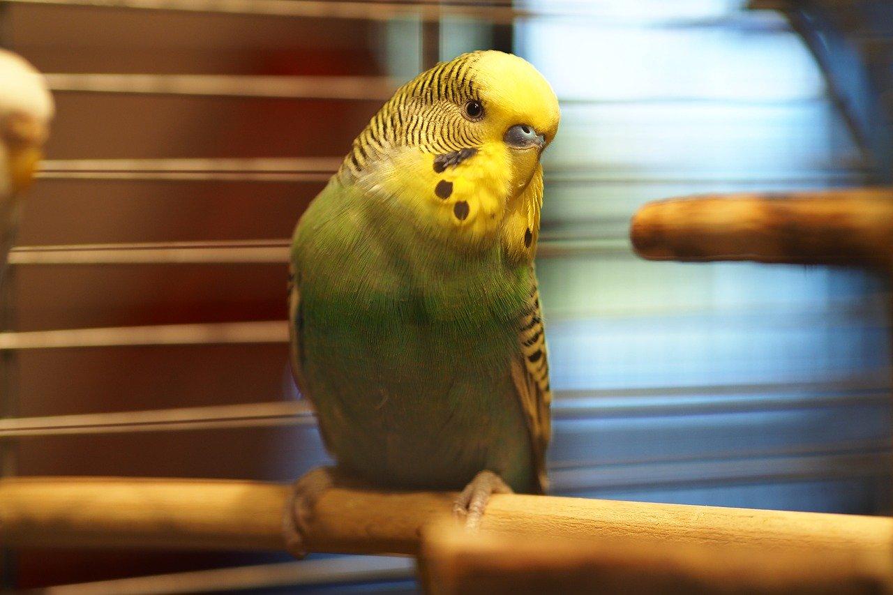 Den richtigen Vogelrucksack ganz bequem online kaufen