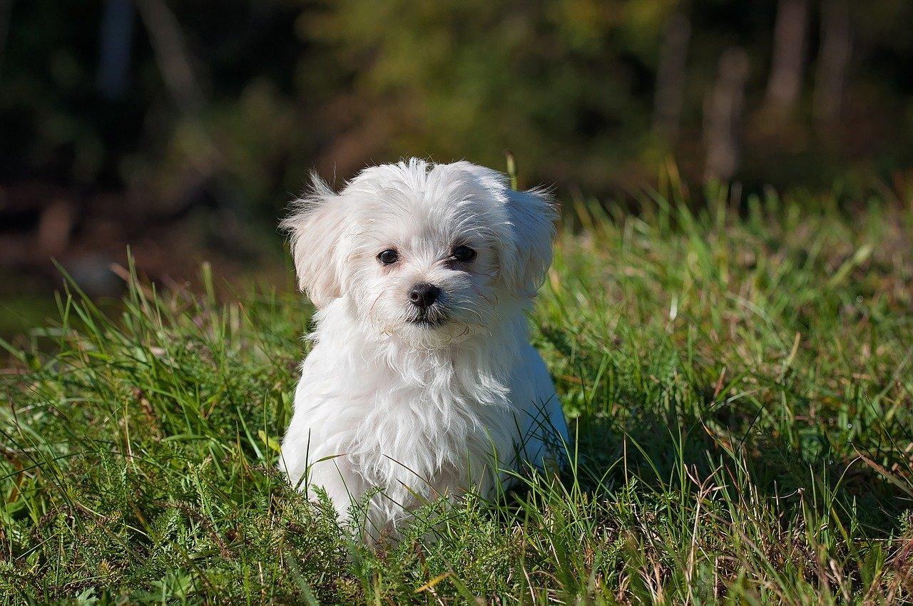 Hundeshampoo – ganz entspannt online kaufen