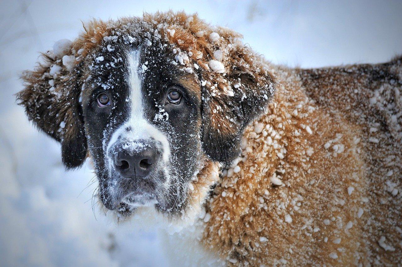 Hundezeckenzange – Die richtige finden!