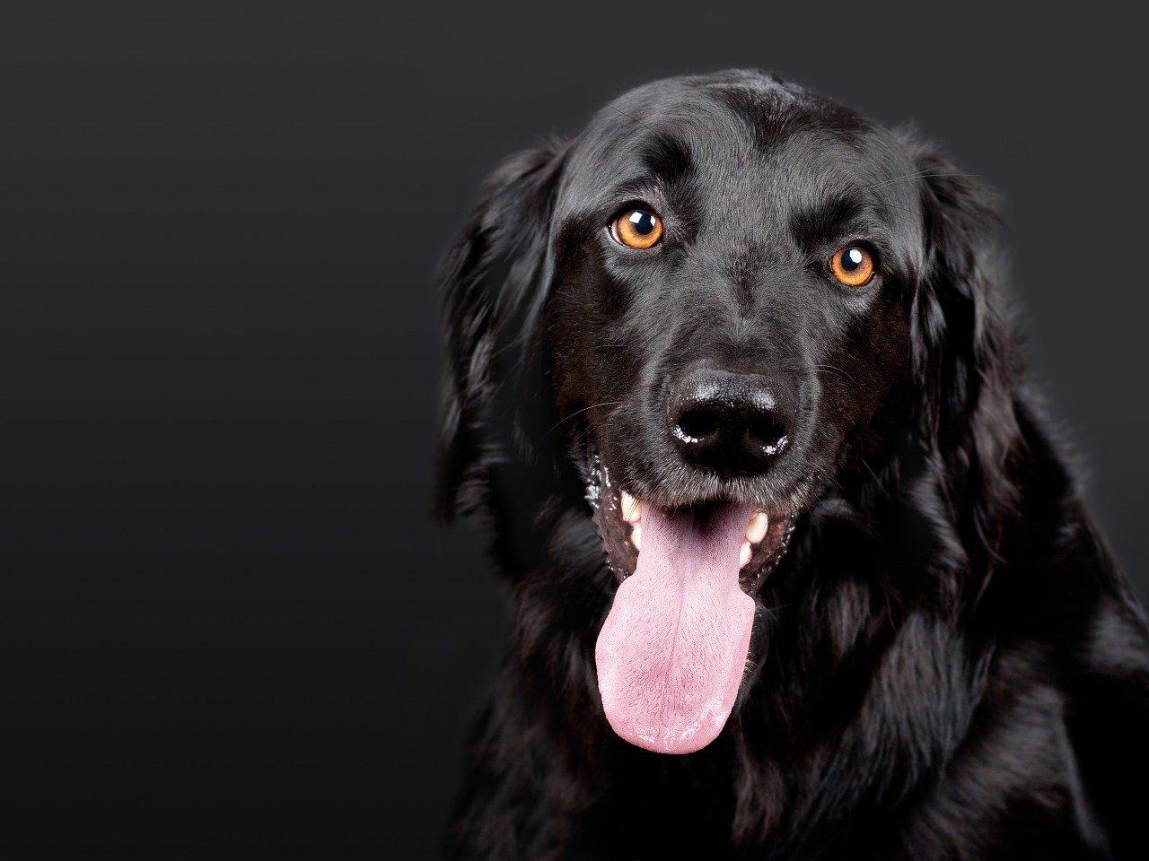 Die richtige Hundebox online kaufen