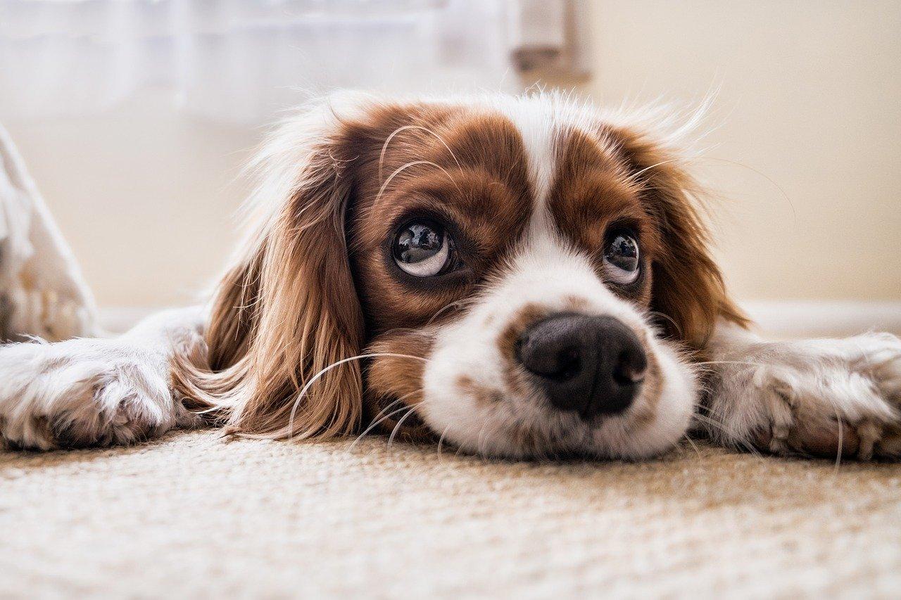 Hundekissen – ganz einfach online kaufen