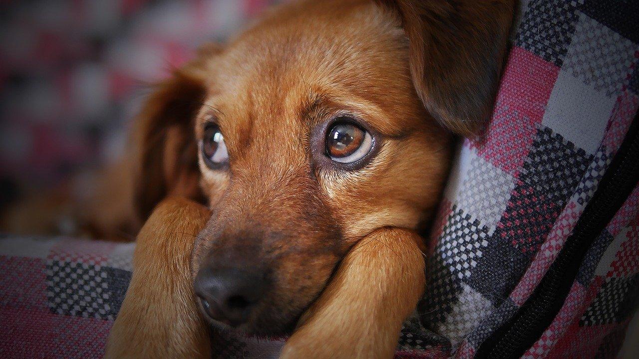 Hundejacke – ganz einfach online kaufen