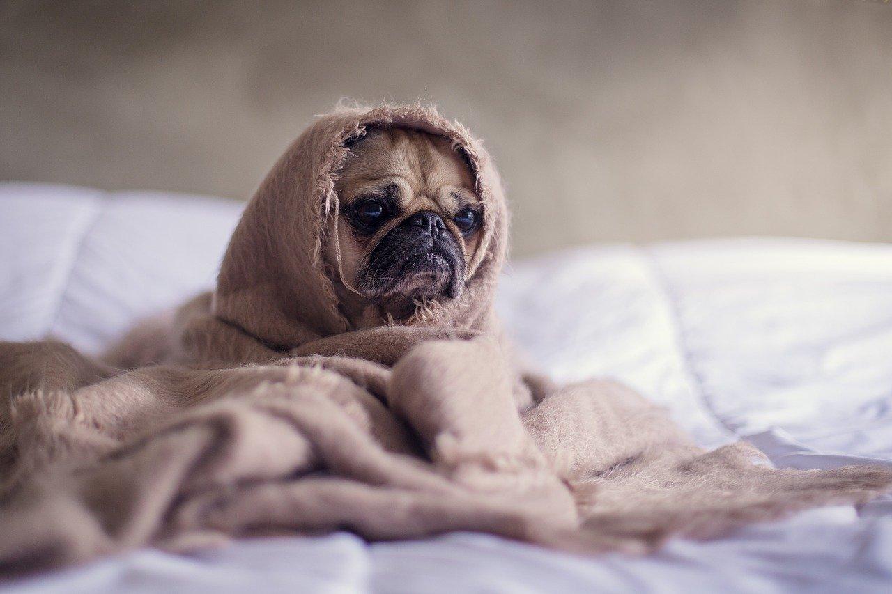 Die richtige Hundedecke leicht online gefunden
