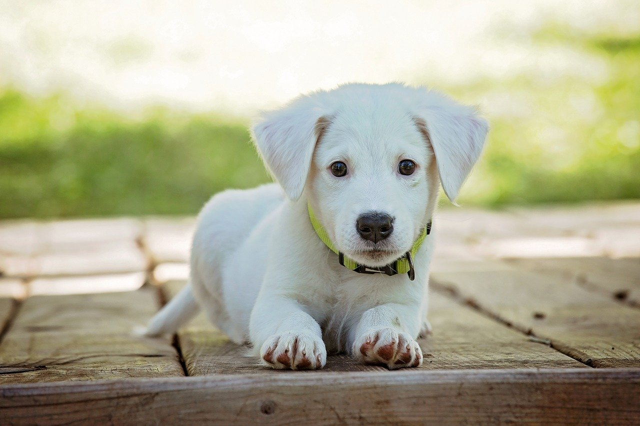 Hundegeschirr aus Leder – bequem kaufen