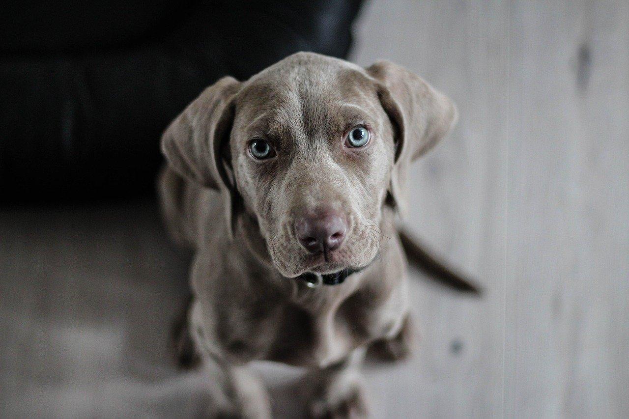 Hundehalsband – ganz einfach gefunden