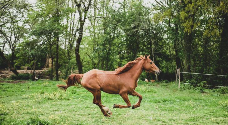 Das Pferd aus dem Tierheim: Ein etwas anderer Weg