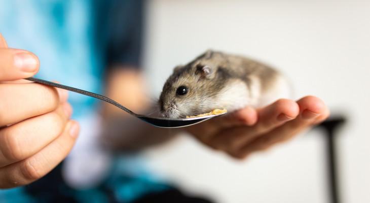 Artgerechte Ernährung des Zwerghamsters