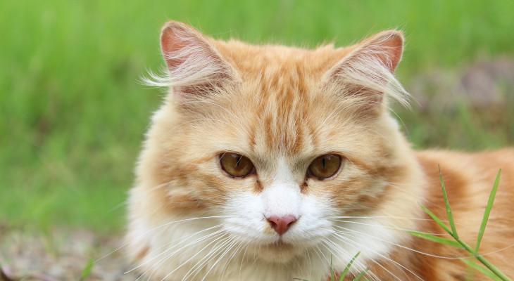 Flöhe und Läuse bei Katzen – So wird man die Plagegeister wieder los